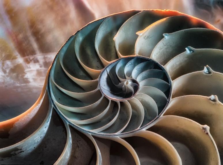 Inside the chambered nautilus