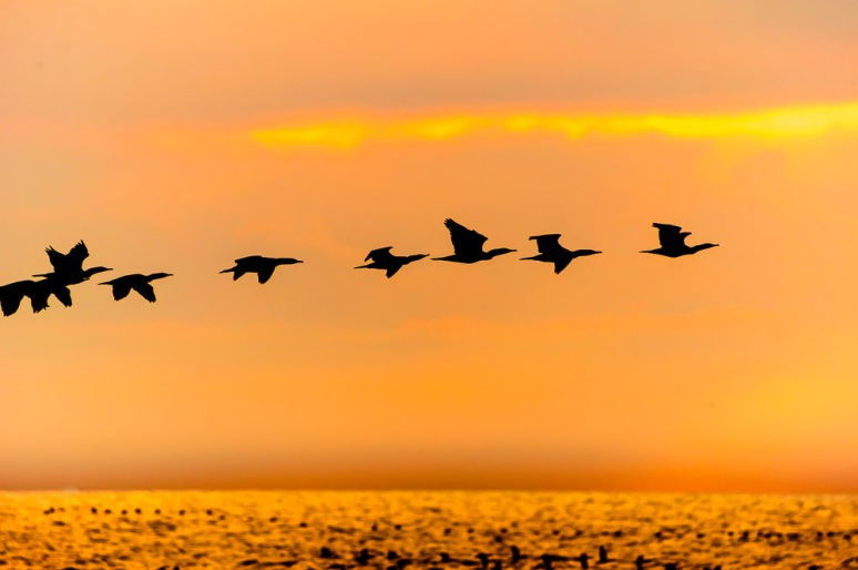 Birds at at dawn on the Eastern Shore