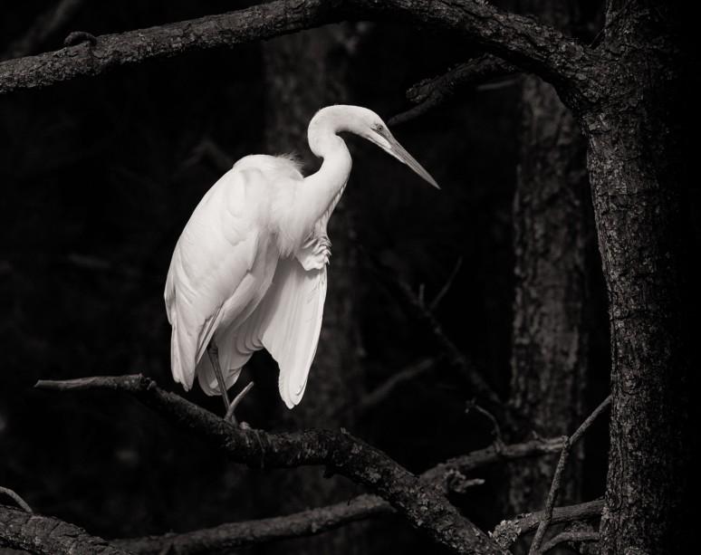 Egret-20141021